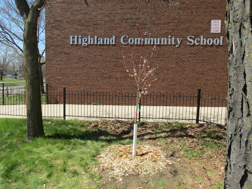 A freshly planted tree stands outside Highland Community School in the Avenues West neighborhood. (Photo by Natalie Wickman)